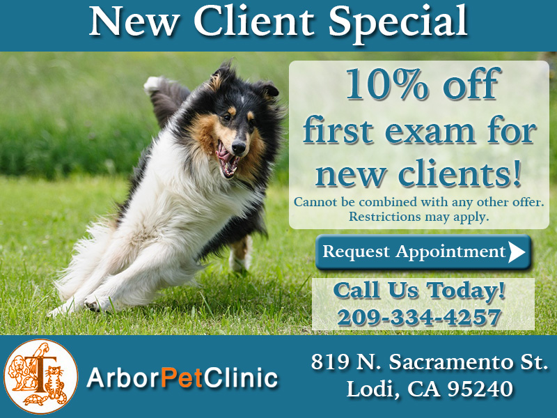 ArborPetClinicNewClientSpecial